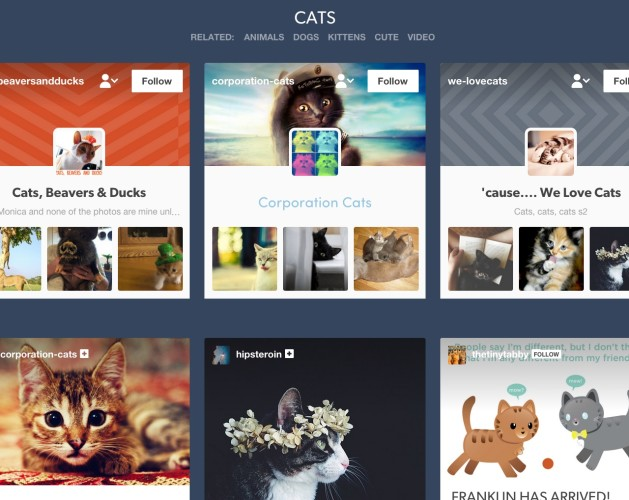 cats___Tumblr-629x500
