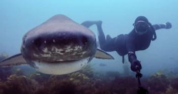 السيلفي يقتل أكثر من القرش الأبيض