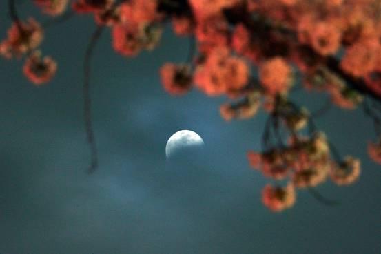 اليابان تخطط لإرسال سفينة فضائية بدون طيار إلى القمر في 2019