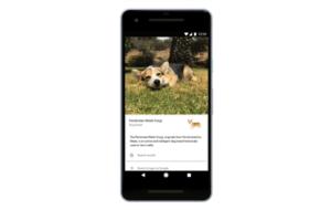 يمكن الآن لـGoogle Lens التعرّف على سلالة القطط والكلاب
