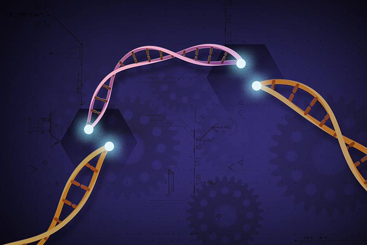 جينات جديدة: عن تقنية تعديل الجينات كريسبر والاختراق الحيوي