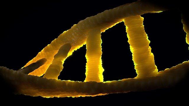 الخصوصية الجينية