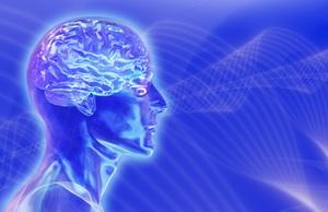 blue brain 4 2 14472236 std النظم الخبيرة   Expert Systems